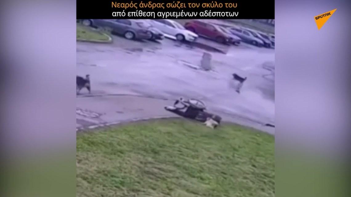 Άνδρας σε αναπηρικό αμαξίδιο πάλεψε με αγριεμένα αδέσποτα για να σώσει τον σκύλο του
