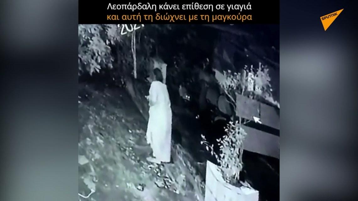 Λεοπάρδαλη κάνει επίθεση σε γιαγιά και αυτή τη διώχνει με τη μαγκούρα
