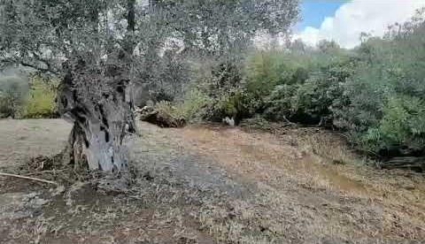 newsbomb.gr: Το σημείο που βρέθηκε νεκρός ο βοσκός στους Τσακαίους της Εύβοιας
