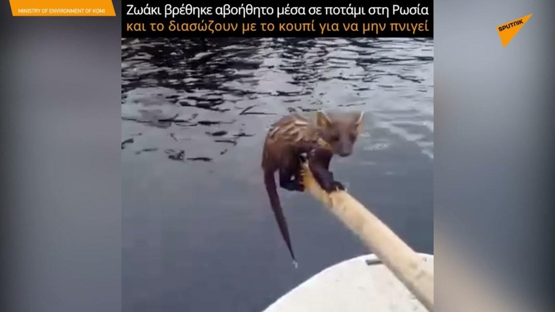 Ζωάκι βρέθηκε αβοήθητο μέσα σε ποτάμι στη Ρωσία και το διέσωσαν με το κουπί για να μην πνιγεί