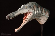 Model of Suchomimus. Photo courtesy of Erin Fitzgerald.