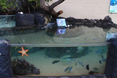A small coral reef exhibit at the center, where visitors can spectate reef fish in their natural habitat. (Kathleen Ferraro/MEDILL)