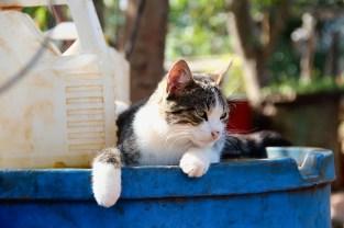Cat, Cojímar. (Giulia Petroni/MEDILL)