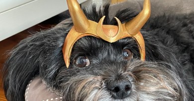 Turn Your Pet Into A Loki Variant With This Quick Tutorial