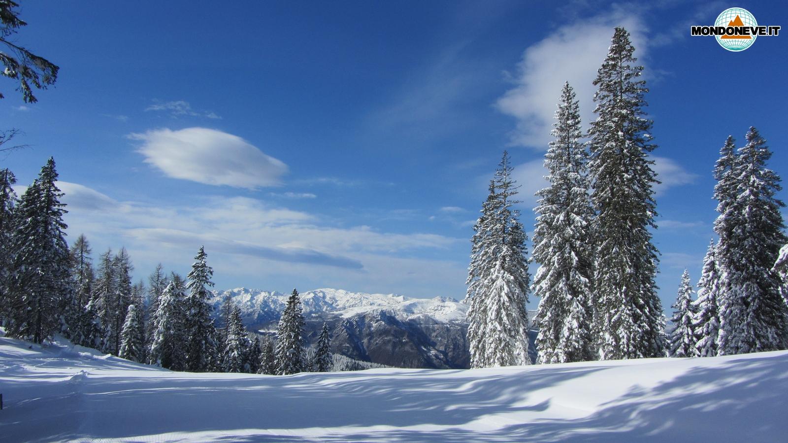 Paesaggio innevato Altopiano di Asiago  Mondo Neve