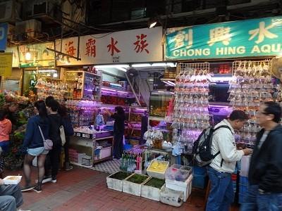 金魚街   [組圖+影片] 的最新詳盡資料** (必看!!) - www.go2tutor.com