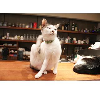 16匹のネコにメロメロ~! メニュー表すら愛らしい台湾の猫カフェに潜入