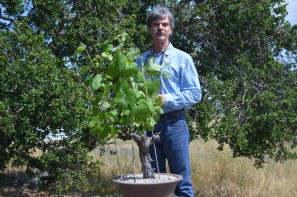 Rick Boyer tends to a vine