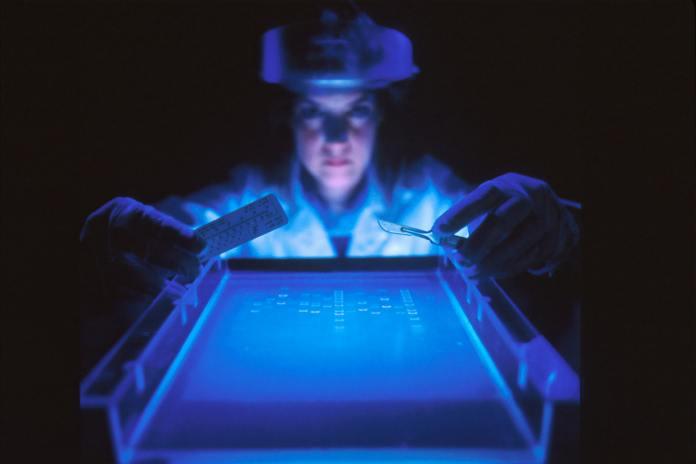 DNA huiman genome image of DNA work