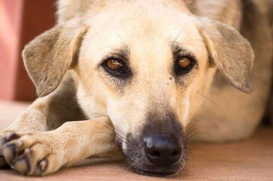 มูลนิธิเพื่อสุนัขในซอยบริการทำหมันสัญจรในพื้นเขาหลัก
