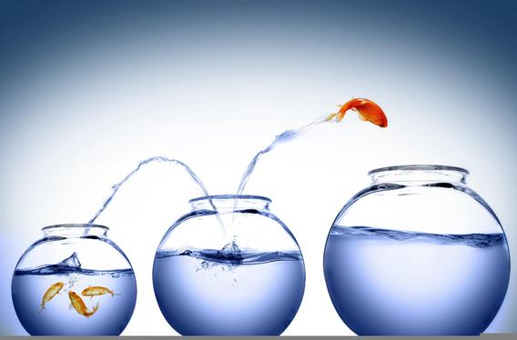 Principle of Successful 1