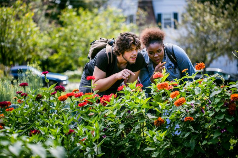 DFC students looks at flowers and insects in the Stewardship Garden during a Dougherty Family College Biology class on the St. Paul campus on September 28, 2017. Students worked to chart the progress of efforts to bring more pollinating insects to campus.