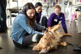 Human Resources staffer Ally Wunrow pets a dog during Dogtoberfest. Mark Brown/University of St. Thomas