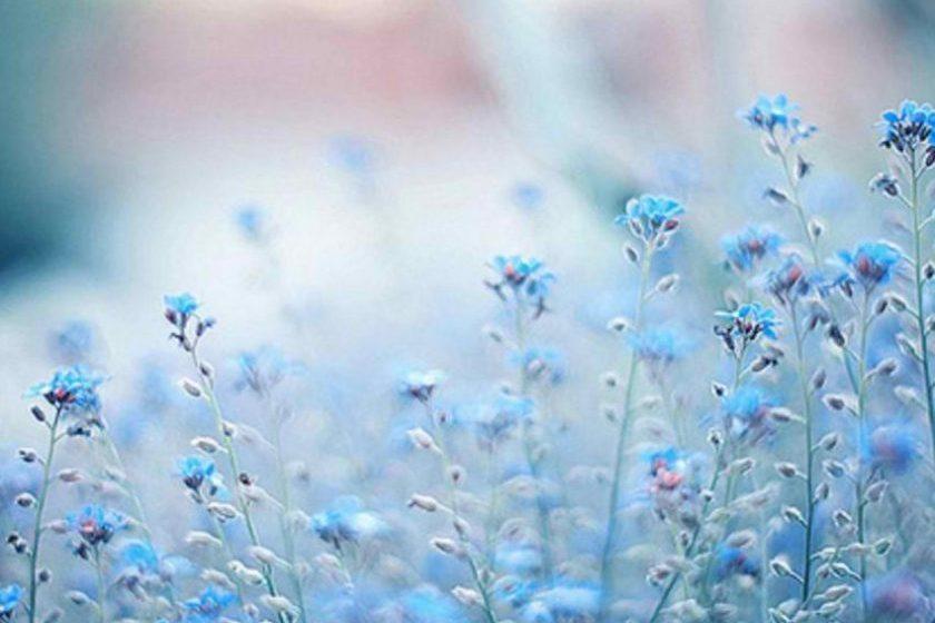 blue-flowers-cynthia-selahblue-cynti19-30569029-1280-1024