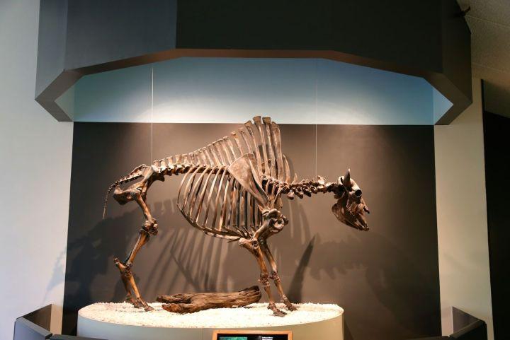 Antique Bison