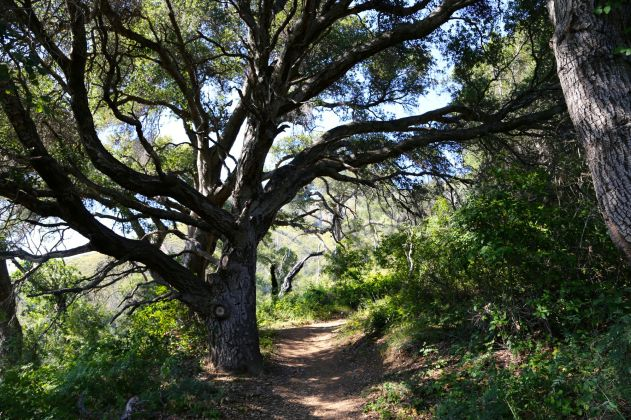 Manual Peak Trail winds across the former Innocente homestead to Manuel Peak, named after Immanuel Innocente.