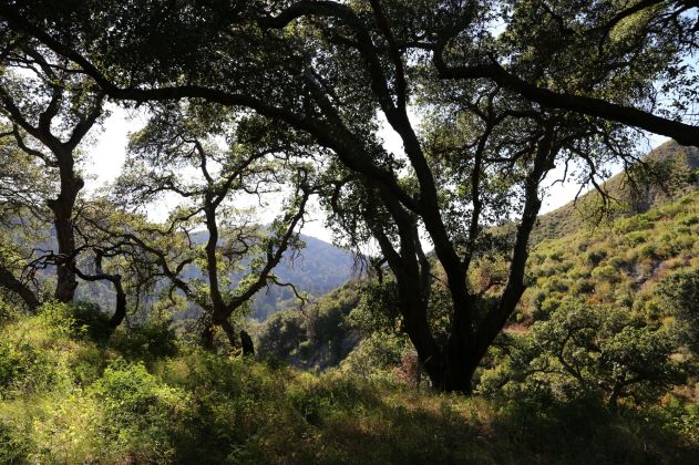 An arrid hillside of Pfeiffer Big Sur State Park