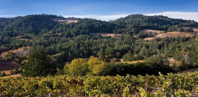 Calistoga Hills Photo Cushman & Wakefield