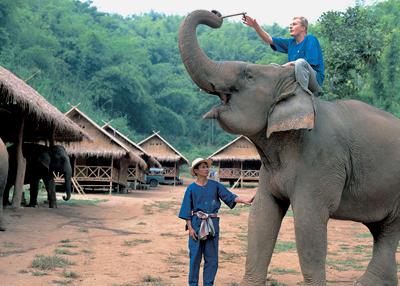 تعلم قيادة الفيلة في تايلاند