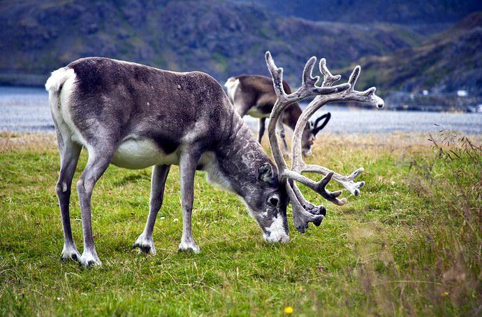 فولجيفونا السياحة النرويجية folg_03.jpg?resize=6