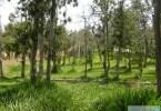 «غابة رغدان» تسيطر على فعاليات صيف الباحة