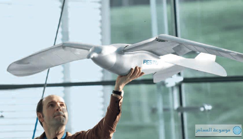 باحثون يصممون أجنحة طائرات شبيهة بأجنحة الطيور الكواسر