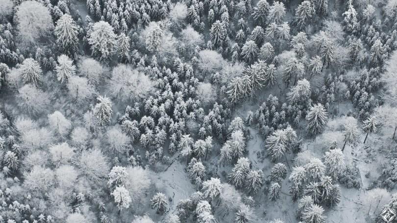 أمريكا-ولاية-بافاريا-سحابة-من-الضباب-ثلوج-منتصف-الشتاء