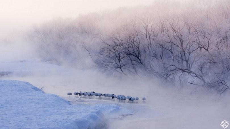 اليابان-الريف-الياباني-فصل-الشتاء-ثلوج-منتصف-الشتاء