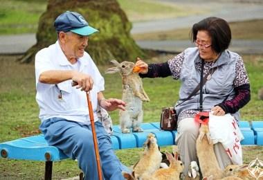 جزيرة الأرنب في اليابان 2