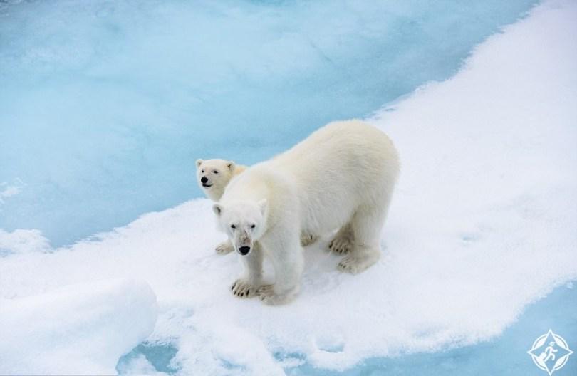 خليج الدببة القطبية 2