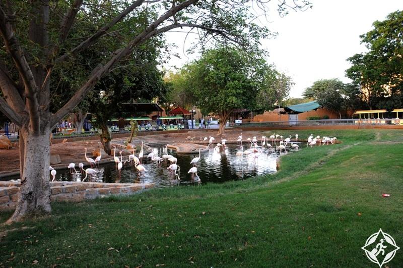 حديقة الحيوان بالرياض 6