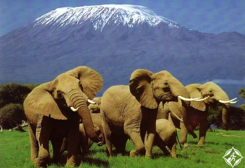 السياحة في كينيا - محمية أمبوسيلي الوطنية