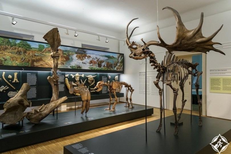 متحف التاريخ الطبيعي - المعالم السياحية في غراتس