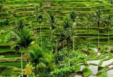 مدن إندونيسيا