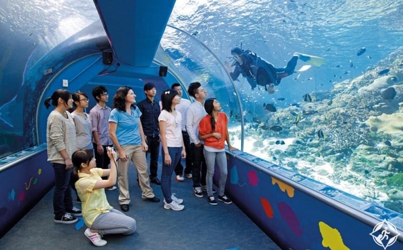 المعالم السياحية في تاونزفيل - أكواريوم الحاجز المرجاني العظيم