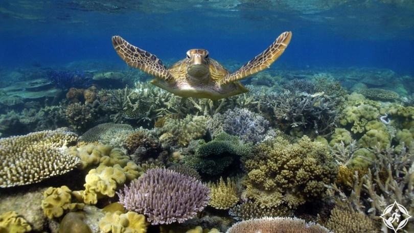المعالم السياحية في تاونزفيل - الحاجز المرجاني العظيم