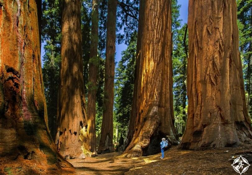 كاليفورنيا - منتزهات سيكويا وكينغز كانيون الوطنية