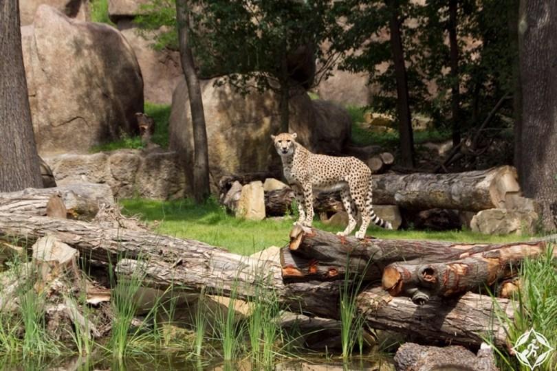 لايبزيغ - حديقة حيوانات لايبزيغ