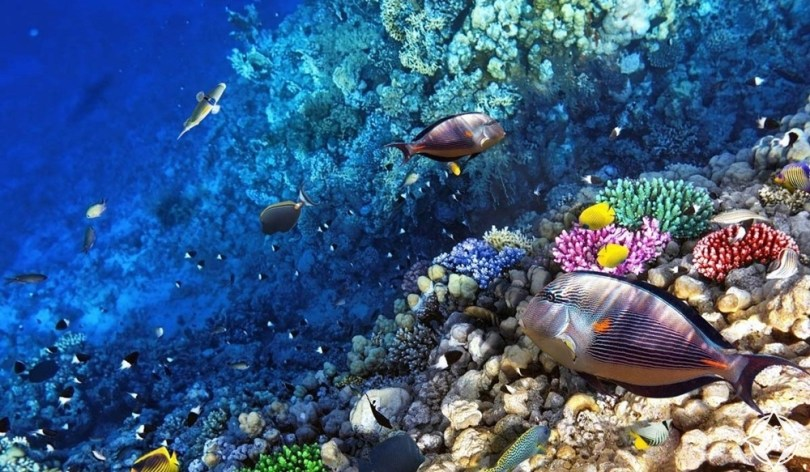 كوينزلاند - الحاجز المرجاني العظيم
