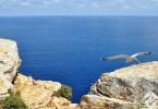جزيرة فورمونتيرا