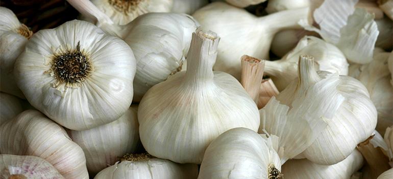 garlic 770