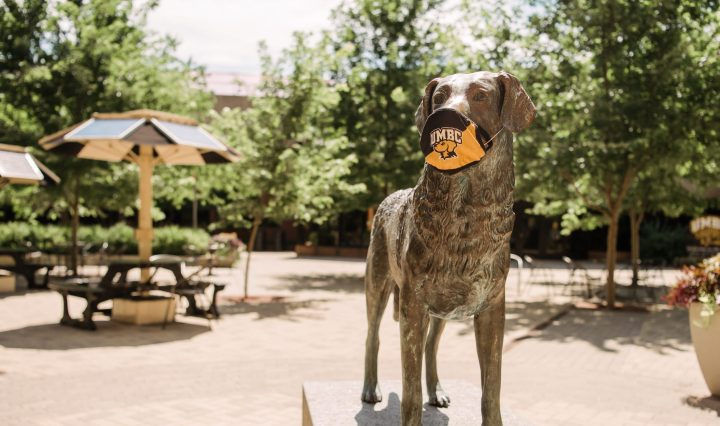 "Retriever dog statue wearing face mask that reads ""UMBC"""