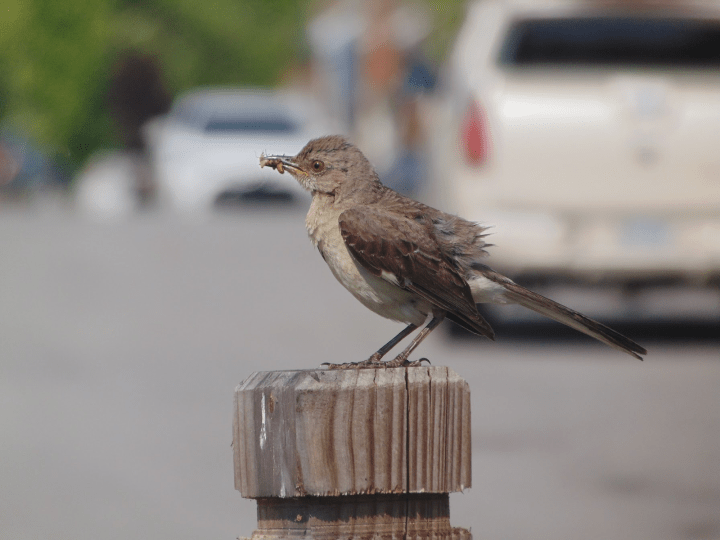 gray and white bird perched on a fence post.