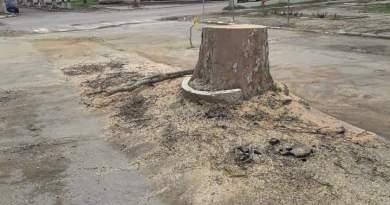 Motivul din care sunt defrișați arborii în mun. Ungheni