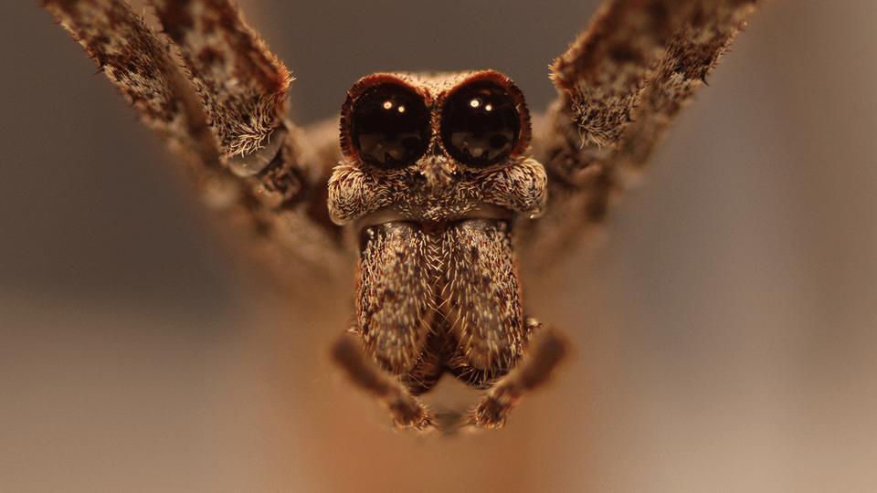 Net-casting spider