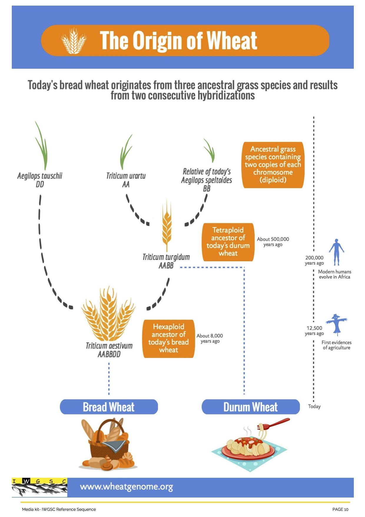 University Of Saskatchewan Crop Scientists Help Crack The