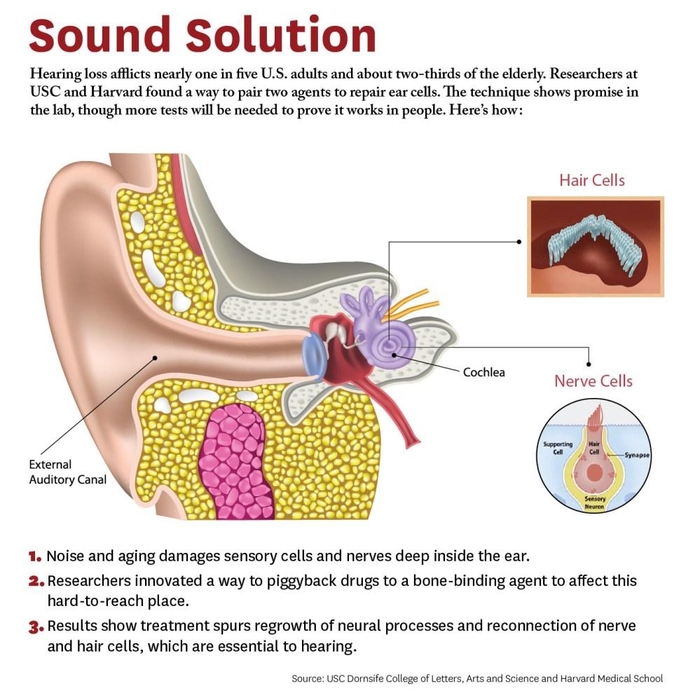 medium resolution of graphic explaining how treatment mechanism works
