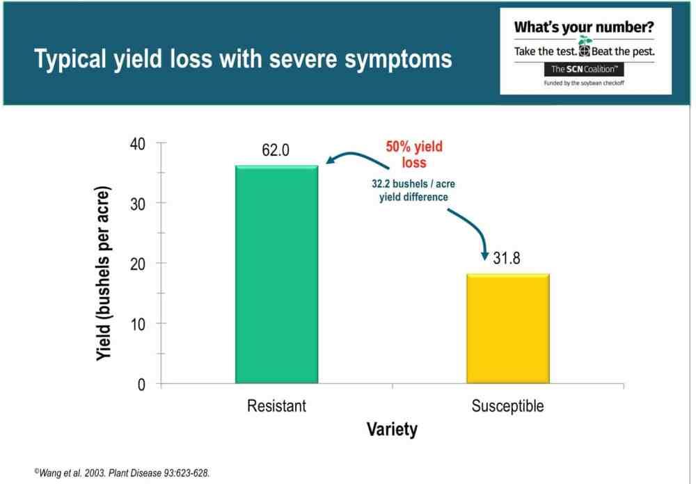 medium resolution of scn yield loss1