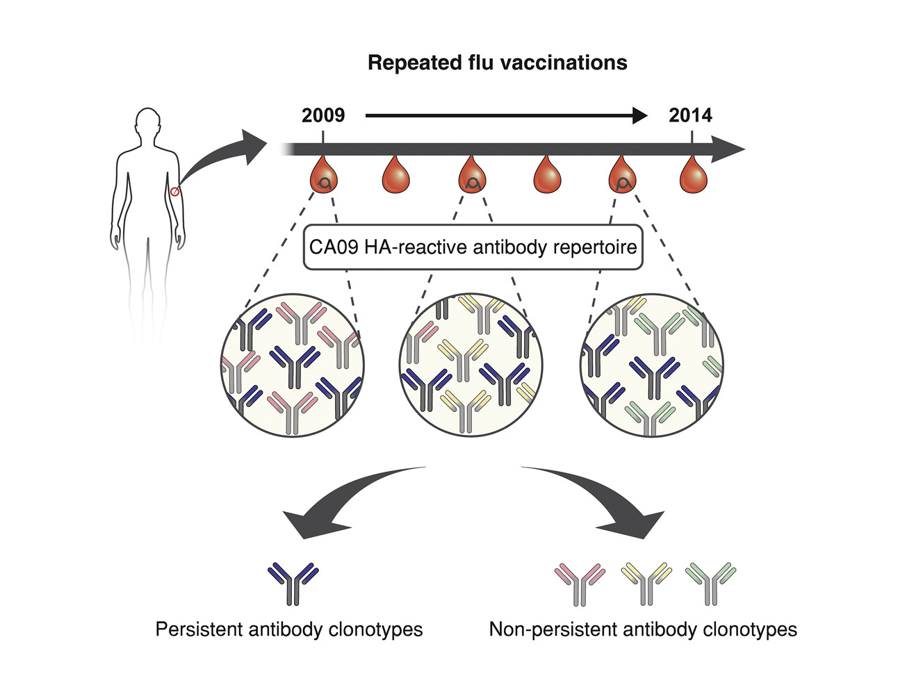 Antibodies From Earlier Exposures Affect Response To New