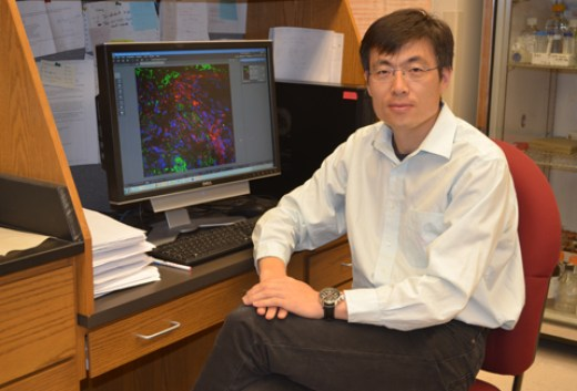 With the help of a $308,000 grant from the American Heart Association, Dr. Dong Wang and his research team will be able to further explore ways to improve the treatment of patients with heart attack and ischemic heart disease.